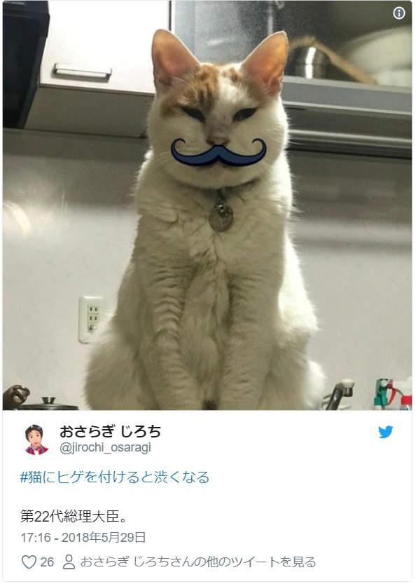 猫咪装上假胡子的结果,原本调皮的孩子瞬间变稳重绅士