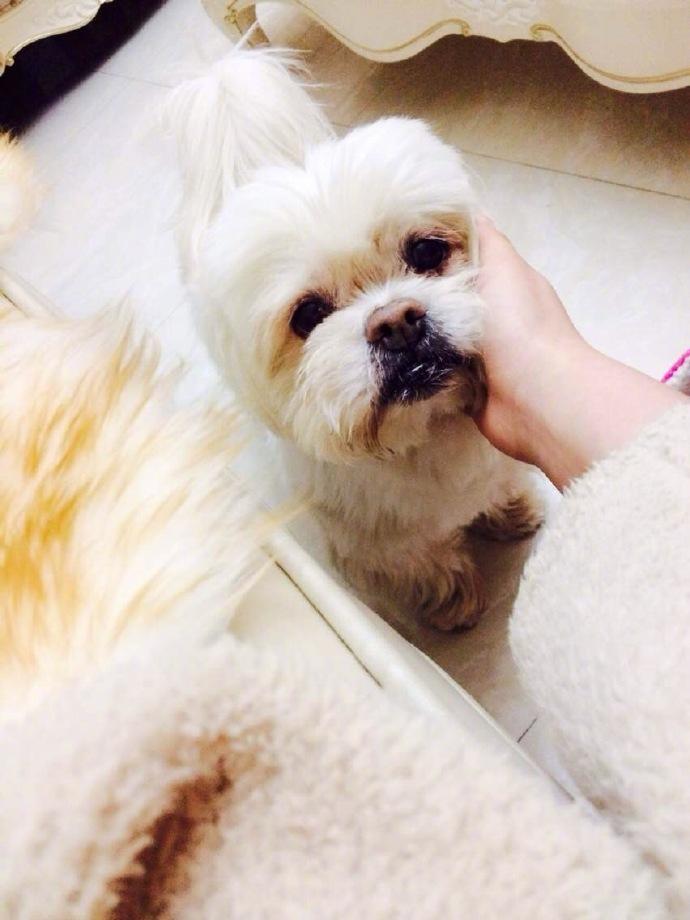 18岁爱犬死了,张馨予发文看哭网友,它要主人结婚幸福后再离开!