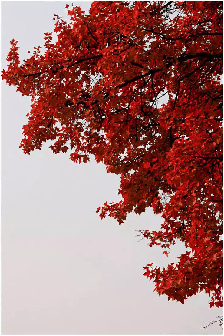 全国各省赏秋旅行地推荐!你的家乡上榜了吗?