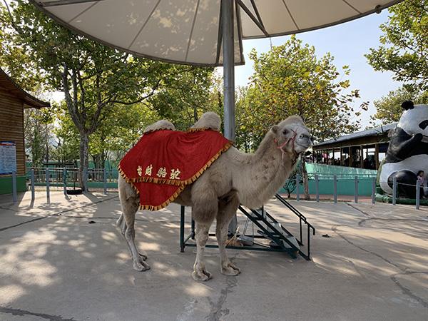山东威海一村办动物园付费可与幼虎合影 自称保护区
