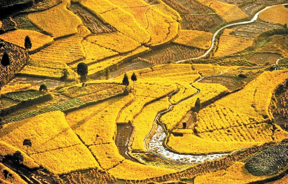 浙江私藏的这些金色梯田  堪称秋日绝景还全部免费
