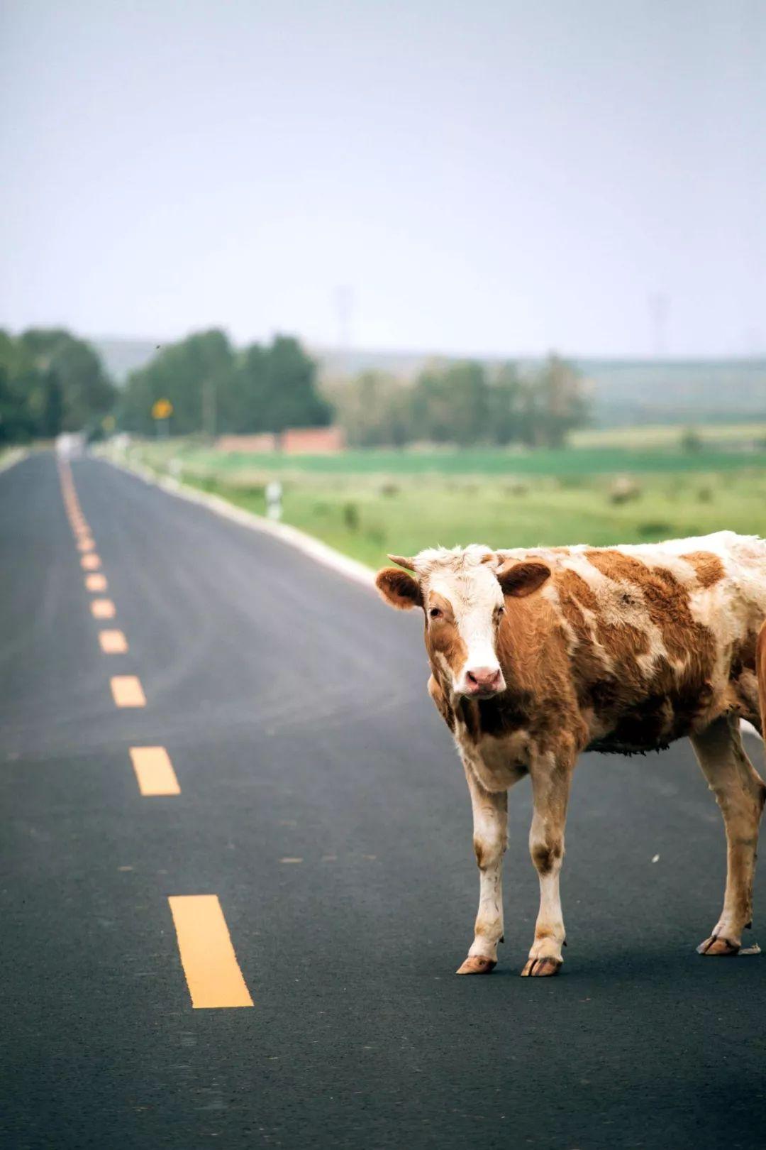 一路向北 奔向烏蘭察布大草原