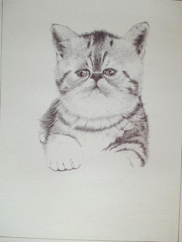 圆珠笔画——猫主子驾到,闲杂人等退避