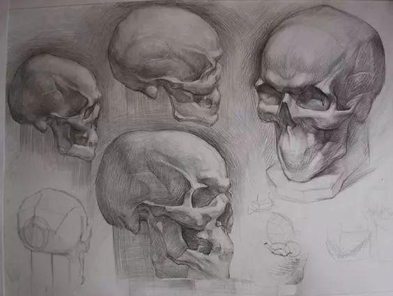 画素描头像,画的是内在,不是表面 所以,想画好人头像,头骨的结构必须