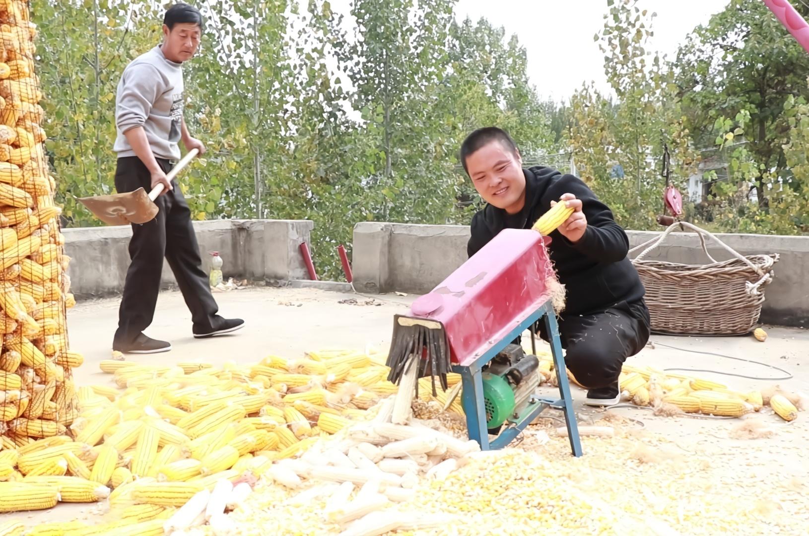 小伙岳父家拖玉米,女婿为啥不去帮忙?却让朋友去干活