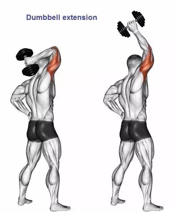 训练手臂动作大全肌肉图解,练爆你的肱二与肱三头肌