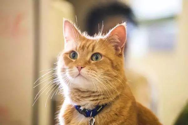 猫鲍勃演技爆表,影片全程暖心,电影《流浪猫鲍勃》热映好评如潮