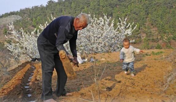 为什么现在农村大片田土无人耕种?