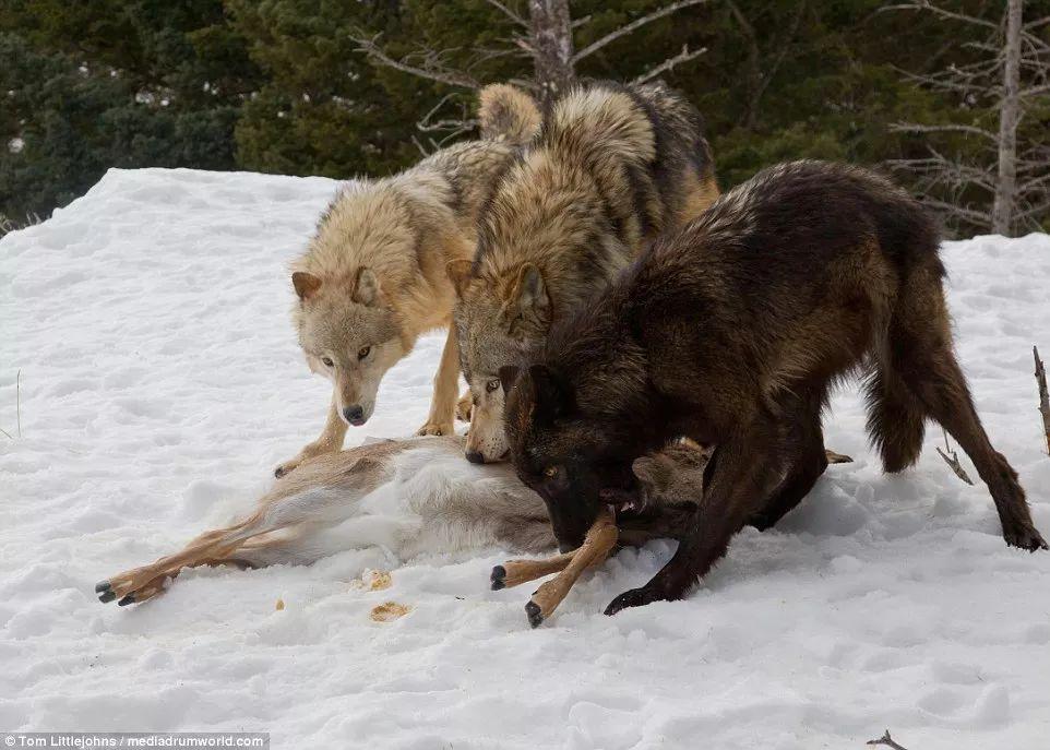 > 正文   摄影基地把野生动物当成摇钱树 用铁链绑起来 凹造型供摄影