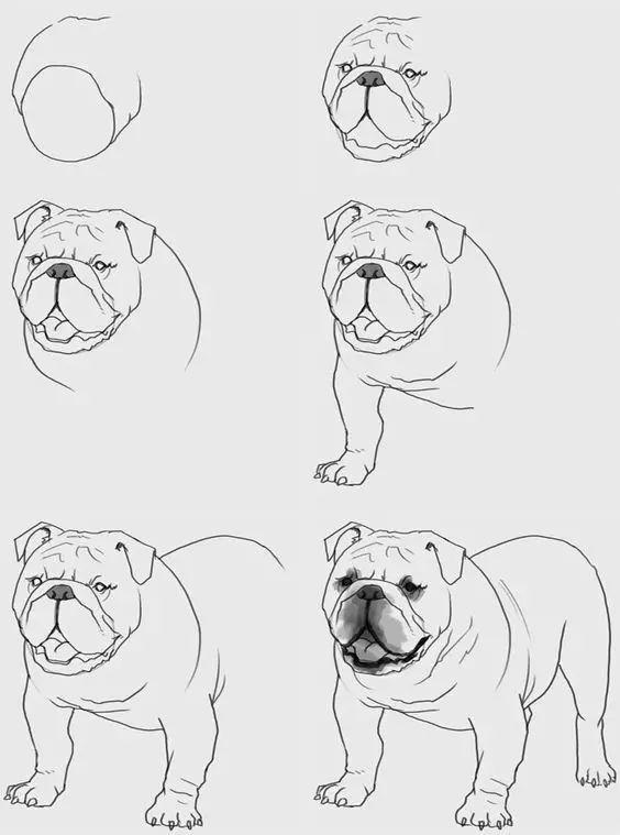 够你画一整年的动物速写教程!