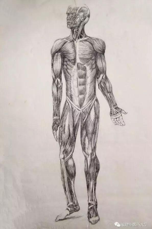 叫解剖学 手绘解剖图,不仅可以依托画图来帮助医生定位,对人体有更