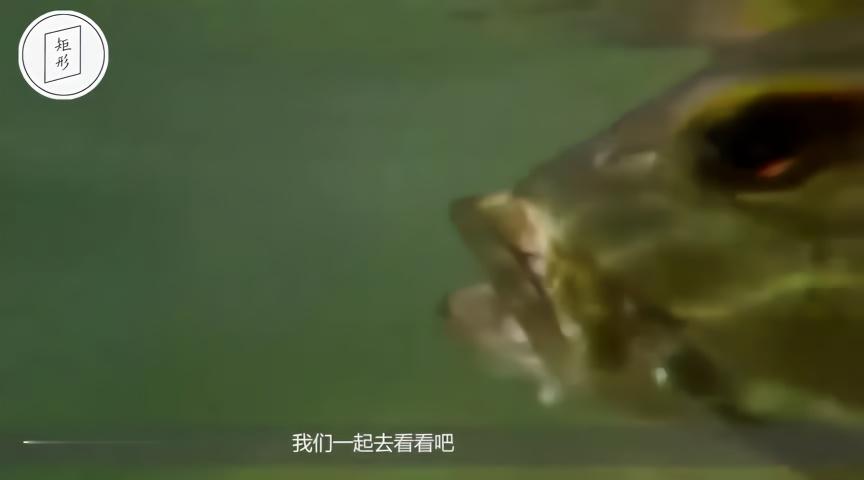 鱼的雕刻步骤图解