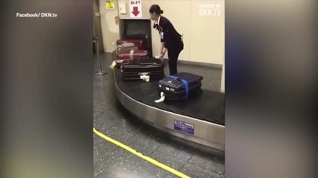 老外惊了 日本机场居然这样对待我们的行李