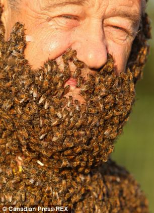 """埃及一男子蓄""""蜜蜂胡子""""来宣传蜜蜂益处"""