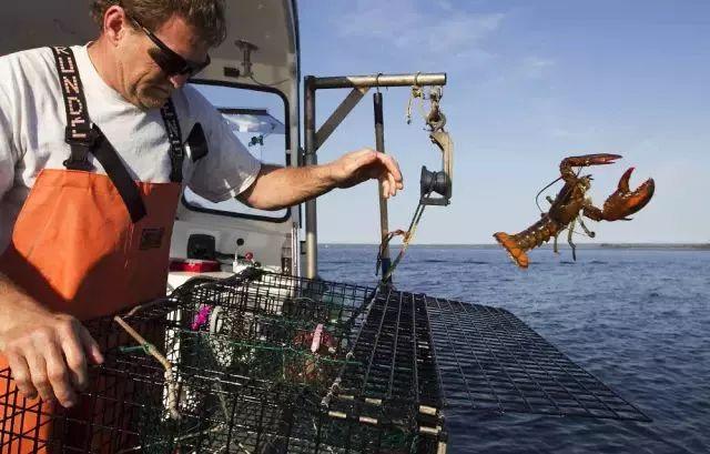贸易战有多愚蠢?美国大龙虾们的遭遇说明一切(图)