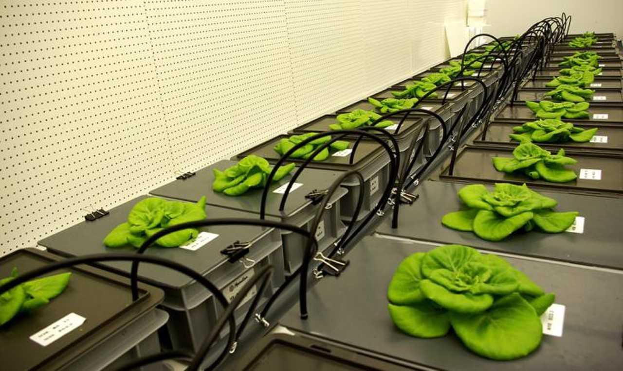 2021年航天员就能吃上自己种植的新鲜豆角了