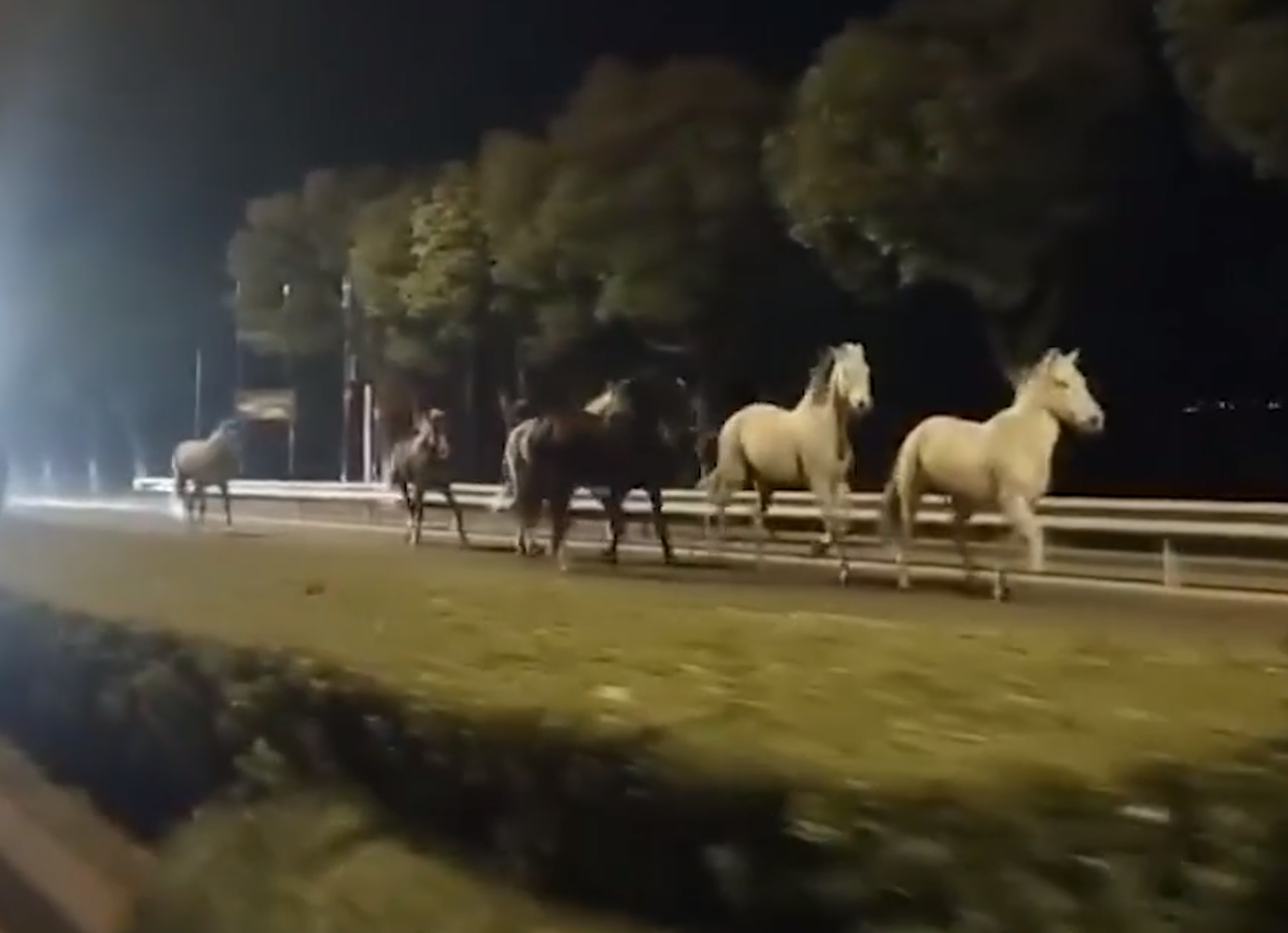 27凌晨上海街头忽现9匹骏马