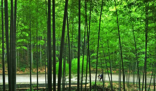 宜興竹海風景區