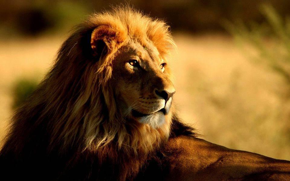 """军事资讯_佛经中说的""""狮子虫""""是一种什么动物 真相很恐怖_凤凰佛教"""