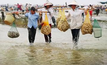 违法占海养殖场被清 上千人前来挖海鲜