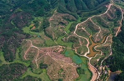 """广西钦州:药材种植地成旅游一景"""" width="""