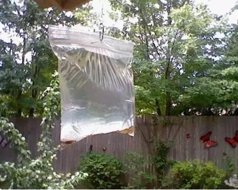 驅趕蠅蟲,只需塑料袋里裝點水……快給家人朋友看看!|行業新聞-商丘金塑商貿有限公司