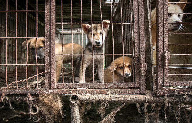 电刑中年肥女小?_韩国逾170只狗获救 免于电刑做成食物